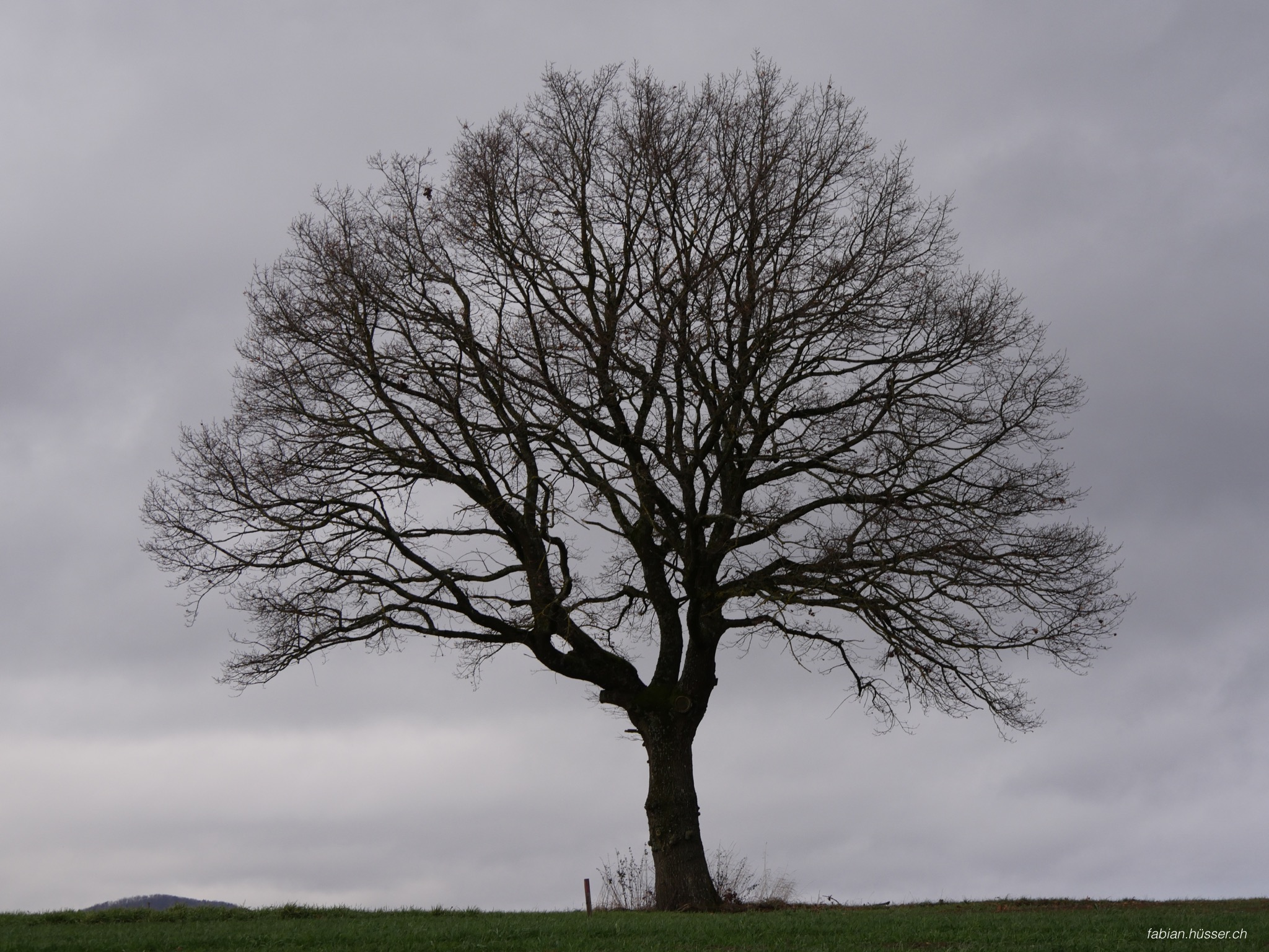 Baum in Berikon (November)